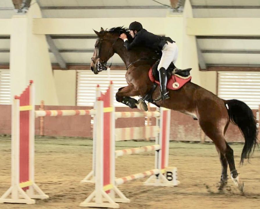 """""""Elite Horse & Polo Club"""" Kubokunun ilk mərhələsi  keçirilib."""